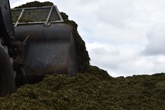 The front loader rolls into chaff a silo pit. Agriculture Royalty Free Stock Images