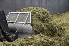 The front loader rolls into chaff a silo pit. Agriculture Royalty Free Stock Photos