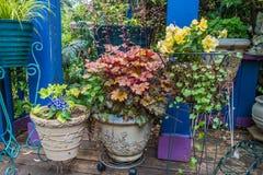 Front Porch Plants 3 imagem de stock