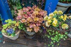 Front Porch Plants 4 fotos de stock