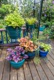 Front Porch Plants 2 imagens de stock