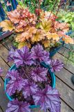 Front Porch Plants Closeup imagens de stock royalty free
