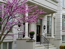 Front porch of townhouse. With crabapple tree in bloom Stock Image