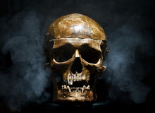 Front of real skull royalty free stock photo
