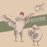 Front rooster and brood Royalty Free Stock Images