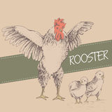 Front rooster and chick Stock Photos