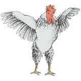 Front rooster sketch Stock Images