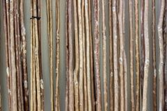 Front shoot of array of reeds texture. royalty free stock photo