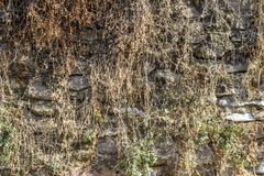 Front shot of masonry wall covered with yellow colored plants stock image