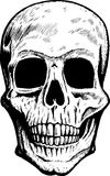Front Skull Stock Photos