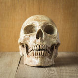 Front skull on wood background. Picture royalty free stock photo