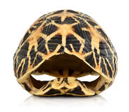 Front of a turtles shell isolated. Front view of a tortoise shell isolated on white Royalty Free Stock Photography
