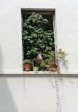 Front van een venster met installaties Royalty-vrije Stock Foto