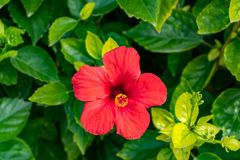 Front view of a blooming red flower royalty free stock images