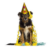 Front view of a Border collie partying, sitting, Stock Photography