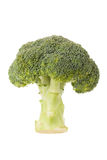 Front view of broccoli Stock Image