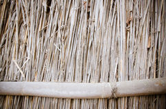 Front view of cane dry Royalty Free Stock Photography