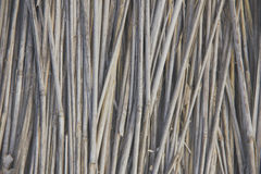 Front view of cane dry, as a background Royalty Free Stock Photos