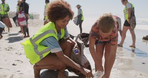 Boy helping female volunteer in cleaning beach 4k