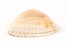 Front view of clam shell on side Stock Photos
