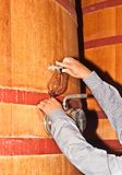 Pouring wine from a wood, wine barrel in a wine cellar. Front view, close distance of the arms of a wine maker pouring a sample of wine from a wood, wine barrel royalty free stock photo