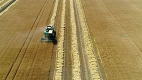 Aerial drone footage. Front view combine harvester gathers the wheat. Harvesting grain field. stock video footage