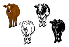 Front view cow set Royalty Free Stock Images