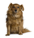 Front view of Crossbreed dog, sitting Royalty Free Stock Photos