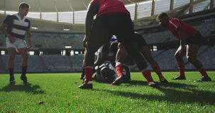 Rugby players playing rugby match in stadium 4k. Front view of diverse rugby players playing rugby match in stadium. They are tackling each other 4k stock video