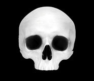 Front view of a fake skull Stock Image
