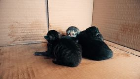 New born baby kittens sleeping together in a carton box. Front view of four new born kittens sleeping together in a carton box stock video