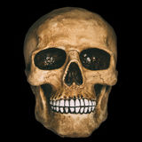 Front view of human skull. Over black background Royalty Free Stock Photos