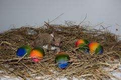 Front view on a little porcelain easter bunny and colorful easter eggs on a hay with copy space stock photography