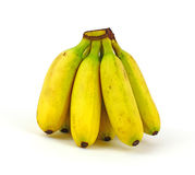 Front View Mini Bananas Stock Image