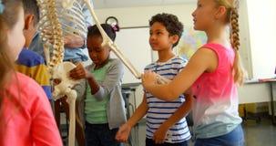 Multi-ethnic school kids fixing skeleton model in classroom at school 4k. Front view of Multi-ethnic school kids fixing skeleton model in classroom at school stock video footage