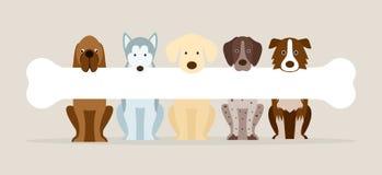 Group of Dog Breeds Holding Bone Royalty Free Stock Photography