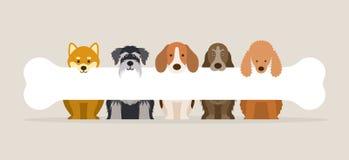 Group of Dog Breeds Holding Bone Stock Photography
