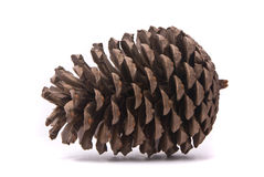 Front view of a pine cone Royalty Free Stock Photo