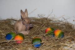Front view on a porcelain easter bunny and colorful easter eggs on a hay with copy space royalty free stock image