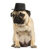 Front view of a Pug puppy wearing a top hat, sitting Royalty Free Stock Photography