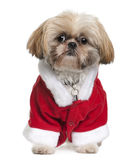 Front view of Shi-Tzu in Santa Claus suit sitting Stock Photography