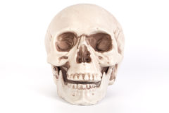 Front view of a skull with open mouth isolated on black backgrou Royalty Free Stock Photo