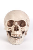 Front view of a skull with open mouth isolated on black backgrou Stock Photo