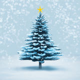 Front view snow christmas tree pine isolated. Stock Images