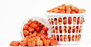 Front View of Two Buckets of Tomatoes. A studio front close-up view of two buckets of freshly picked unwashed field tomatoes with on tipped with tomatoes Stock Photography