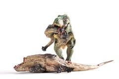 Front view tyrannosaurus biting a dinosaur body on white. Background royalty free stock photo
