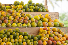 Front View. A variety of mangoes displayed in a cart, ready to be sold Royalty Free Stock Photo