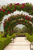 Front view of a Wedding garden of arching roses at a southwest winery in Spain. Front view, a wedding garden of arching roses on a chilly, rainy, summer day at a stock photography