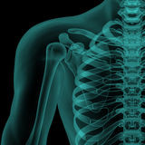 Front x-ray view of human shoulder Stock Images