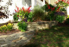 Front-yard. A flowering front-yard with stone wall Royalty Free Stock Photo